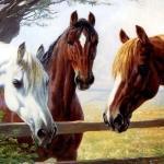 caballos05g